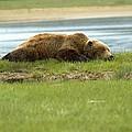 Sleeping Bear by Jeffrey Akerson