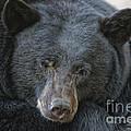 Sleeping Bear by Mitch Shindelbower