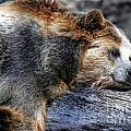 Sleeping Bear by Timothy Hacker
