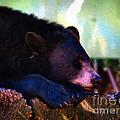 Sleeping Beauty by Art Dingo
