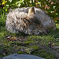 Sleeping Beauty by Wolves Only