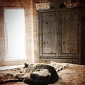 Sleeping Country Kitty  by Kathleen Messmer