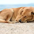 Sleeping Dog by Yew Kwang