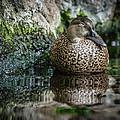 Sleeping Duck by Gabrielle Harrison