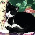 Sleeping Kitty by Jeanne A Martin