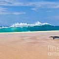 Sleeping Monk Seal At Papohaku Beach In Molokai Hawaii  by Christy Woodrow