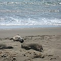 Sleeping On The Beach by Christiane Schulze Art And Photography