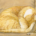 Sleeping Orange Tabby Cat Cathy Peek Animals by Cathy Peek