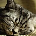 Sleeping Pet by Zoran Berdjan