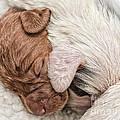 Sleeping Puppies by Julian Eales