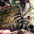 Sleeping Tabby by Jeanne A Martin
