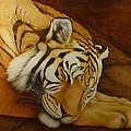 Sleeping Tiger by Norm Holmberg