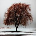 Sleeping Willow by Rick Kuperberg Sr