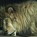 Sleepy Beast by Thomas Shanahan