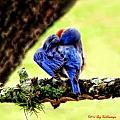 Sleepy Bluebird by Lucy VanSwearingen