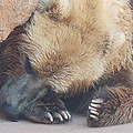 Sleepy Grizzly Bear by Virginia Kay White