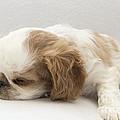 Sleepy Head by Jeannette Hunt