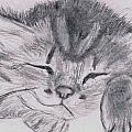 Sleepy Kitten by Luke Harrington