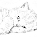 Sleepy Kitty by J D Owen