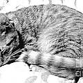 Sleepy Kitty by Lilliana Mendez