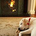 Sleepy Puppy by Diane Diederich