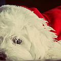 Sleepy Santa by Melanie Lankford Photography