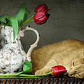 Sleepy Tulips by Diana Angstadt