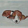 Sleepyhead by Cori Solomon