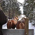 Sleigh Ride Dwn A Snowy Lane by Valerie Kirkwood