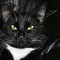Slick The Black Cat by Tikvah's Hope