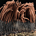 Slime Mould by Us Geological Survey