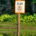 Slow No Wake by Todd Bennett