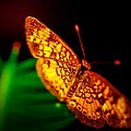Small Butterfly by Gerald Kloss