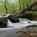 Small Falls by Deanna Cagle
