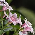 Small Flowers by Joy Watson