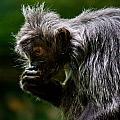 Small Monkey Eating by Jonny D