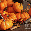 Small Pumpkins With Wood Bucket  by Sandra Cunningham