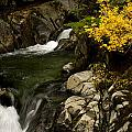 Small Stream During Fall by Shaun McWhinney