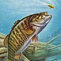 Smallmouth Bass by JQ Licensing