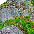 Smartweed Just Below Huayna Picchu's Peak-peru  by Ruth Hager