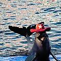 Smiley Dolphin by Sarode Nimmanwattana