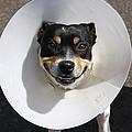 Smiling Dog by Steve Ball
