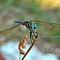Smiling Dragon Fly by Peggy Franz