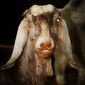 Smiling Egyptian Goat I by Doc Braham