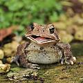 Happy Toad by Theron Clore