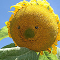 Smiling Sunflower by Heather Bach