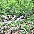 Smith Creek Downstream Of Anna Ruby Falls - 2 by Gordon Elwell