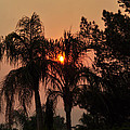 Smoke Covered Sky Sunset Thru The Palm Trees by Jay Milo