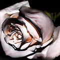 Smoked Rose by Mariola Bitner