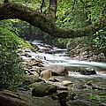Smokey Mountain Stream. No 547 by Randall Nyhof